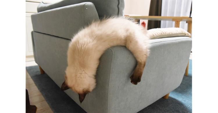 ネコはやはり液体だった!? ソファの端で溶けるように眠る子ネコ。その姿があまりにも液体化していて…