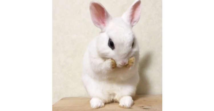 綿毛のように全身フワフワなウサギさん。魅力的なボディーを保つための秘訣はな〜に(*´∀`)? 24秒