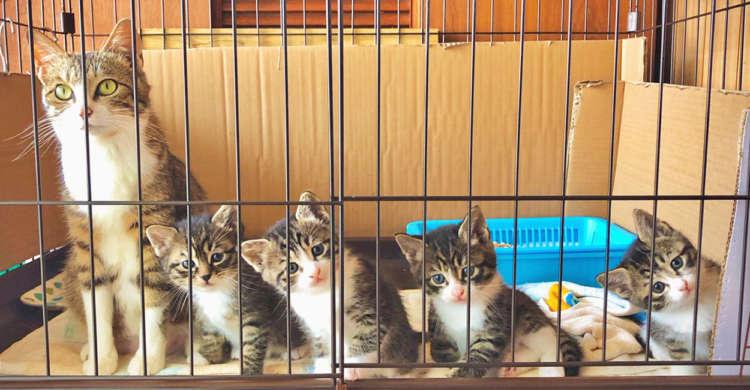 【みんなでハイ、チーズ☆】猫の親子を保護したよ → ステキな家族写真が撮れました(人´∀`*) 3枚