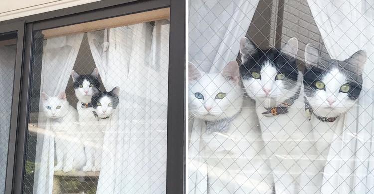 窓の外を見つめ、飼い主さんの帰りを待つニャンズ。その姿がまるで伝説の生き物のようで…(*´Д`)笑