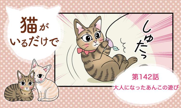 【まんが】第142話:【大人になったあんこの遊び】まんが描き下ろし連載♪猫がいるだけで(著者:暁龍)