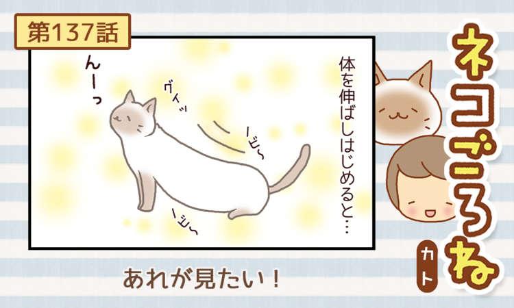 【まんが】第137話:【あれが見たい!】まんが描き下ろし連載♪ ネコごろね(著者:カト)