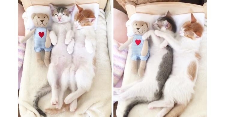 【夢の中にいても息ピッタリ】仲良し子ネコの寝返り → 奇跡のシンクロが可愛いすぎる♡ (18秒)