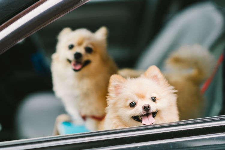 楽しく買ってANAマイルも貯まる!愛犬とのお出かけに役立つアイテム5選をご紹介