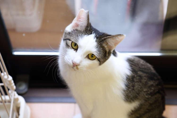 飲料を買って猫助け!「伊藤園」の猫支援自動販売機【八尾】