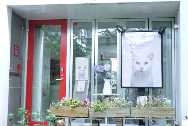 ヨガスタジオの3匹の看板猫【幡ヶ谷】