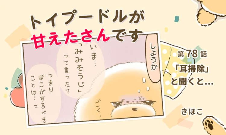 【まんが】第78話:【「耳掃除」と聞くと…】まんが描き下ろし連載♪ トイプードルが甘えたさんです