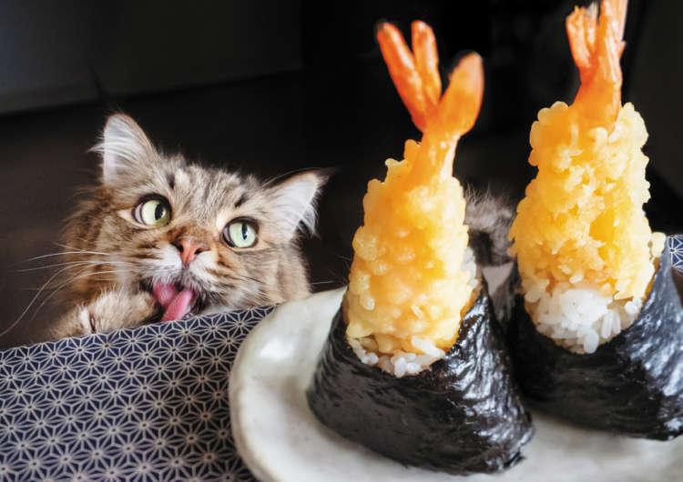 【猫びより】みんな大好き!食いしん坊がんも(辰巳出版)