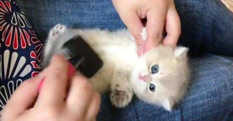 【目指せ!モフモフにゃんこ♪】されるがままの子猫ちゃん。あっという間にキレイキレイ(*´ω`*)♡