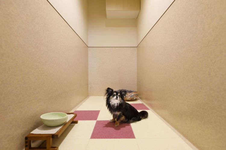 病気や障害がある愛犬のケアも行ってくれます。