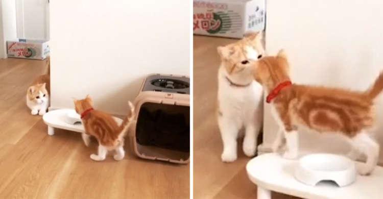 【不意打ちは反則♡】小悪魔子ネコが前触れもなく突然のキス! されたニャンコの反応は…(*´艸`*)