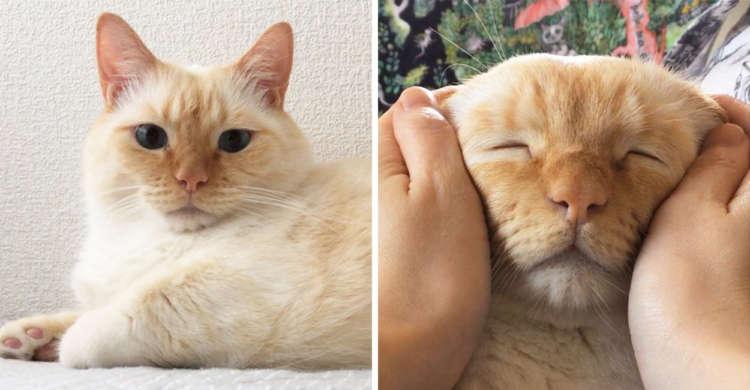 笹かまニャンコのなでり顔♡ マッサージでお爺さんみたいになっちゃう猫さんが可愛い(´Д`)6枚
