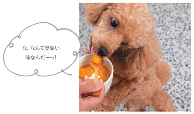 マロンくん(8才/トイ・プードル)