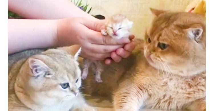ニャンコファミリーに新たな家族。小さな小さな子ネコに大人ニャンコが優しく歓迎(´ε` )♡