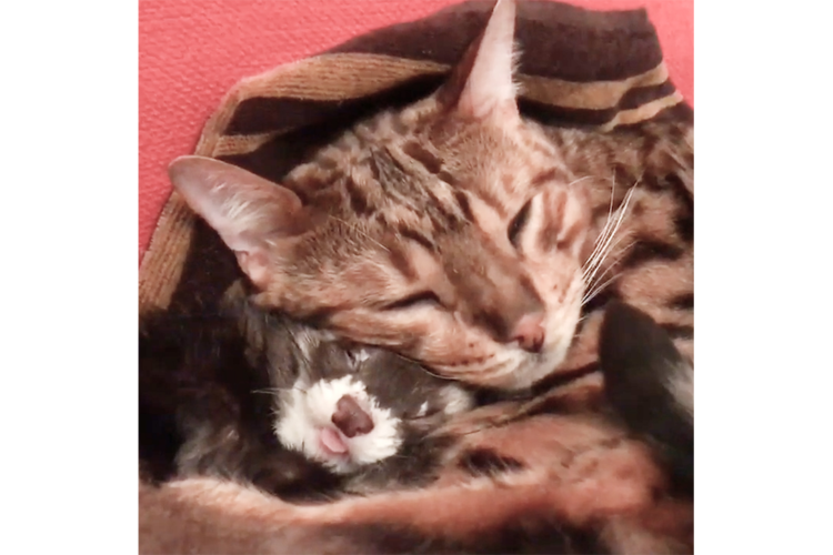 """体の大きさも種類も関係ないね。仲良く眠る、フェレットとニャンコから""""幸せ""""がじわじわ溢れてる♪"""