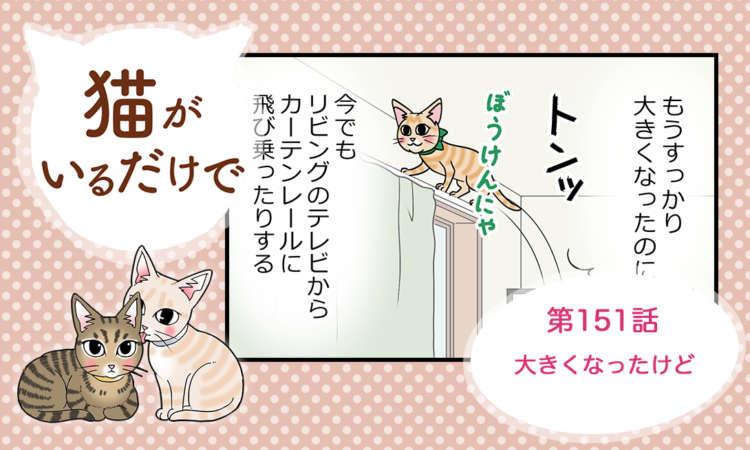 【まんが】第151話:【大きくなったけど】まんが描き下ろし連載♪ 猫がいるだけで(著者:暁龍)