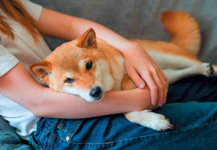 【愛犬のためにしていたあんなこと、こんなこと】実は犬にとって大迷惑!?