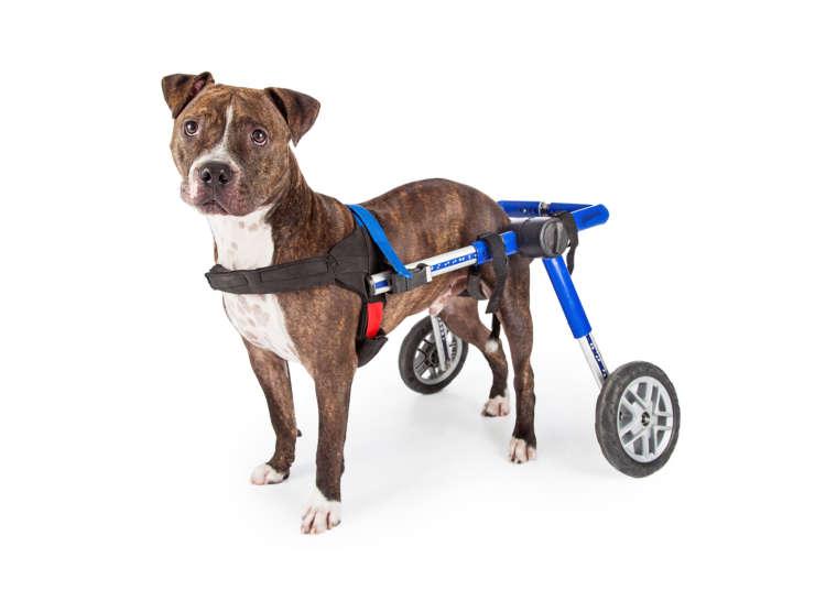 犬用車イスってどんなもの?