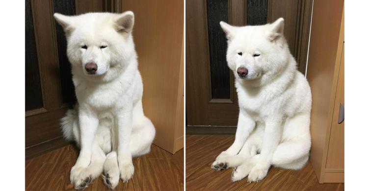 まるで座禅を組んでいるような秋田犬。その貫禄と表情が相まって、見ているだけで心が洗われる!?