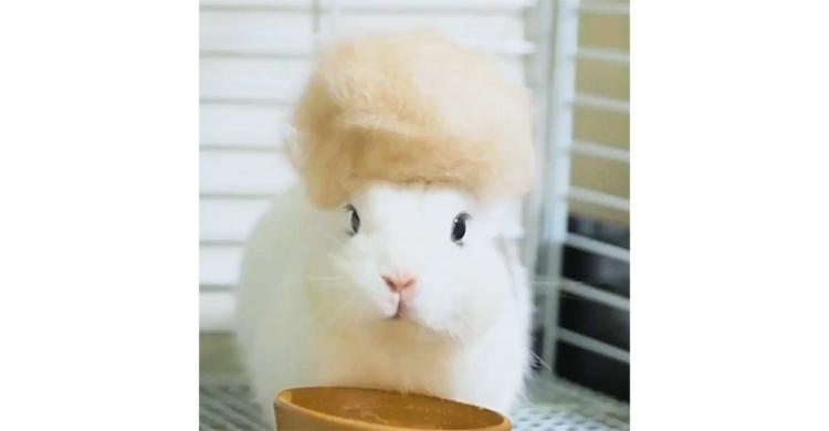 【細かいことは気にしない♡】換毛期の抜け毛で作った特大帽子。頭上からポロッと落ちたとしても…♪