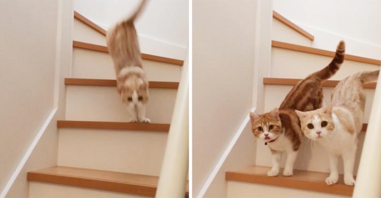 階段から降りてくるニャンコたち。息のあったふたりだけど、よく見ると個性が分かるポイントが…♡