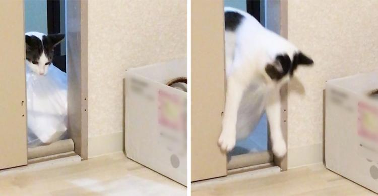 大きな袋を隣の部屋まで運びたい! ちょっぴり強引でドジなネコさん。果たして通れるのか…(*´Д`)
