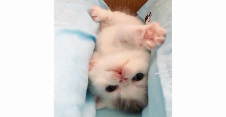 【隙間にジャストフィット】子猫ちゃんがもふもふの溝から抜け出せない!? 一生懸命な姿にきゅん♡