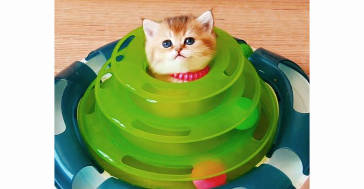 【そんな遊び方アリ!?】 すっぽりハマってこんには。 子猫ちゃんがおもちゃの楽しみ方教えます…♪
