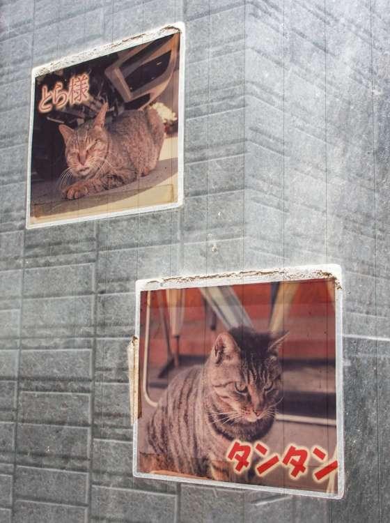 会社玄関先に貼られた先代癒し課猫たちの写真