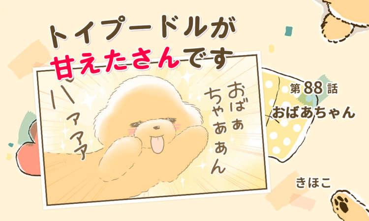 【まんが】第88話:【おばあちゃん】まんが描き下ろし連載♪ トイプードルが甘えたさんです