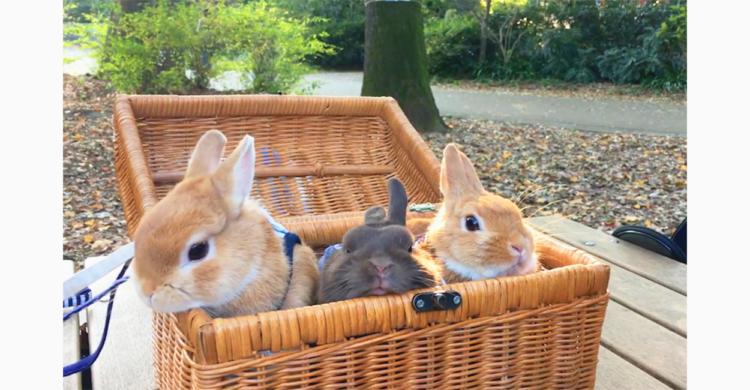 """【うさピクニック】 ポカポカお天気を満喫。お外の空気に""""はなピク"""" が止まらなくて…♡"""