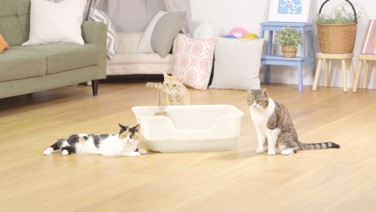 【猫オーナーさん必見!】 猫ちゃんが求める猫砂とトイレ容器の条件を大公開!!
