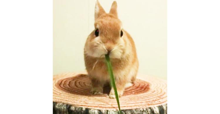 【ウサギさんの口元にご注目】 麺をすするように牧草をチュルチュル…。思わず見入ってしまう43秒