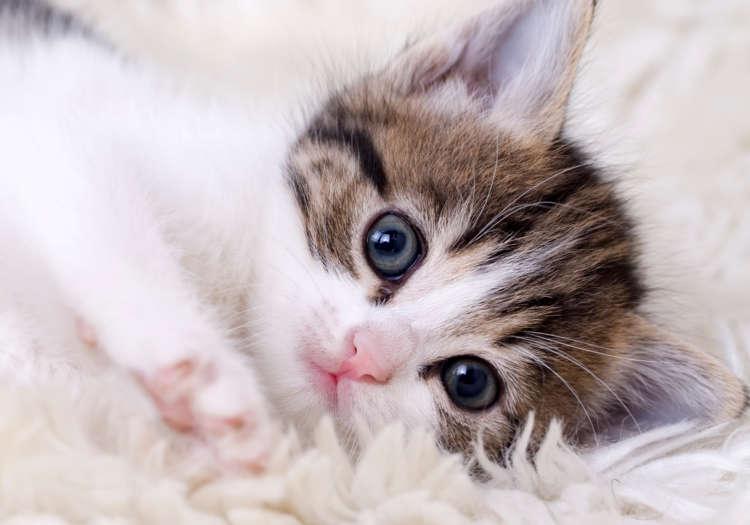 猫ちゃんの生活環境をより快適に。すぐに実践できるポイントをご紹介!