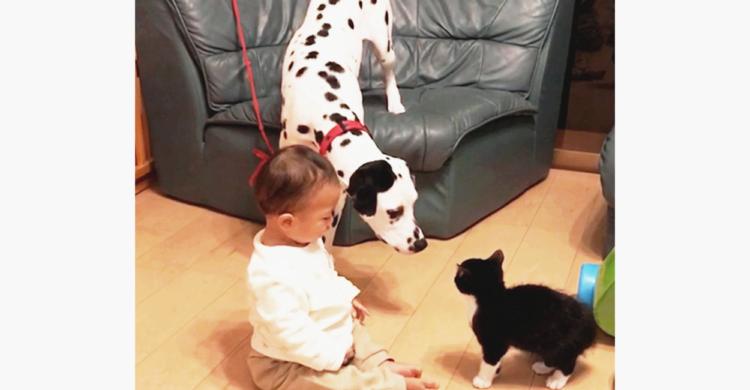 【仲介役はベイビー!?】ダルメシアンが子ネコに近づけるように手招き♪ そのおかげでふたりは…♡