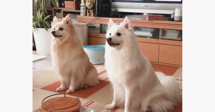 元保護犬のふたり、幸せなご飯タイムにテンションMAX! それぞれのアピールが想像以上に凄かった♪