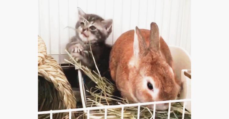 【お邪魔しまーす!】うさぎさんのお家に遊びにきた子猫。 種を超えて寄り添うふたりにきゅん…♡
