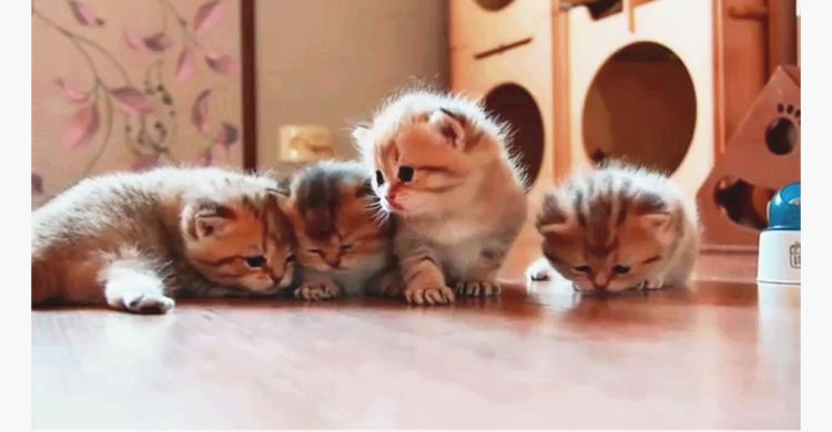 【ママの匂いが大好き♡】よちよち歩きで一生懸命クンクンする子猫たち。ママは見つけられたかな…♪