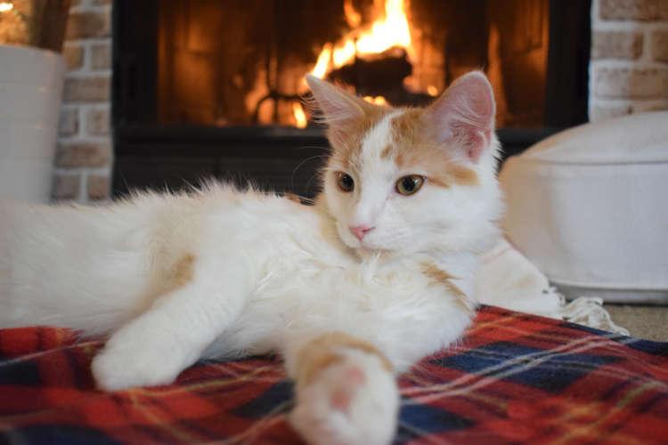 暖かい部屋で過ごす猫ちゃんに近づく危険!冬もノミ・マダニに注意