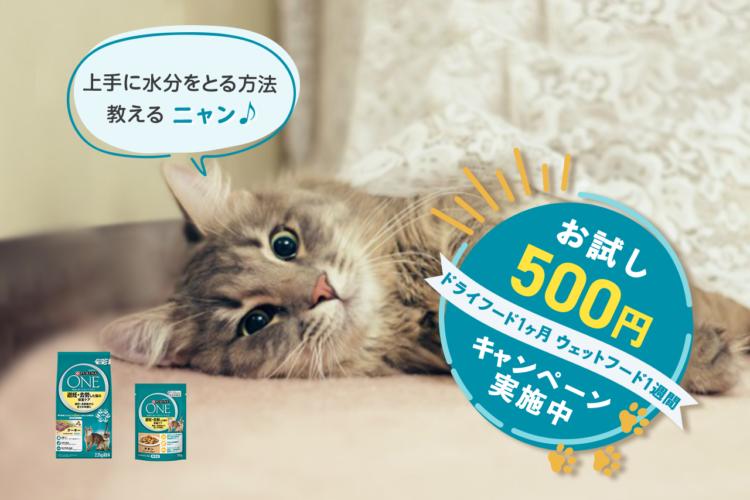 【獣医師監修】愛猫の飲水量気にしてますか? 上手に水分補給ができる方法をご紹介!
