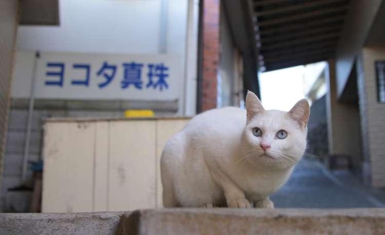 【猫びより】潮の香りが芳しい大王崎の干物屋さん【志摩】(辰巳出版)