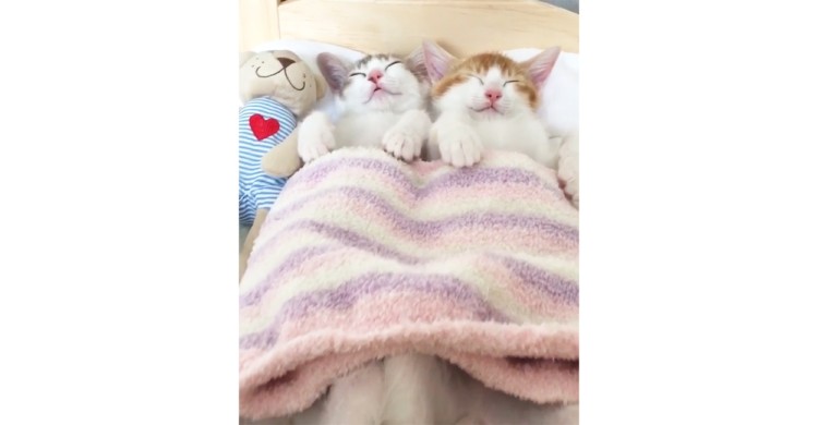【ふたりでひとつ♡】一緒にいればそれだけで幸せ。双子ちゃんの穏やかな寝顔に癒やされる〜(*´∀`)