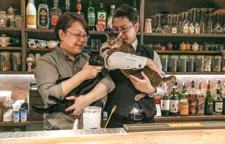 「2匹と2人って、最強の家族!」と猫愛どっぷりな義治さんとやよいさん