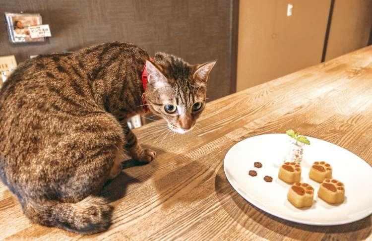 猫メニューのひとつ、「肉球フィにゃんシェ」を絶賛オススメ中の茶月
