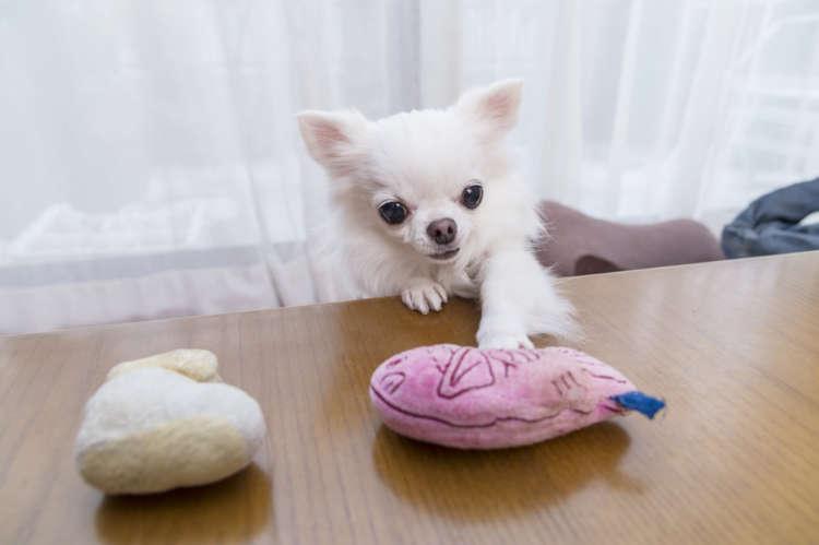 【チワワスタイル】【キミがいてボクがいる】My Dog! My Style!(その2)