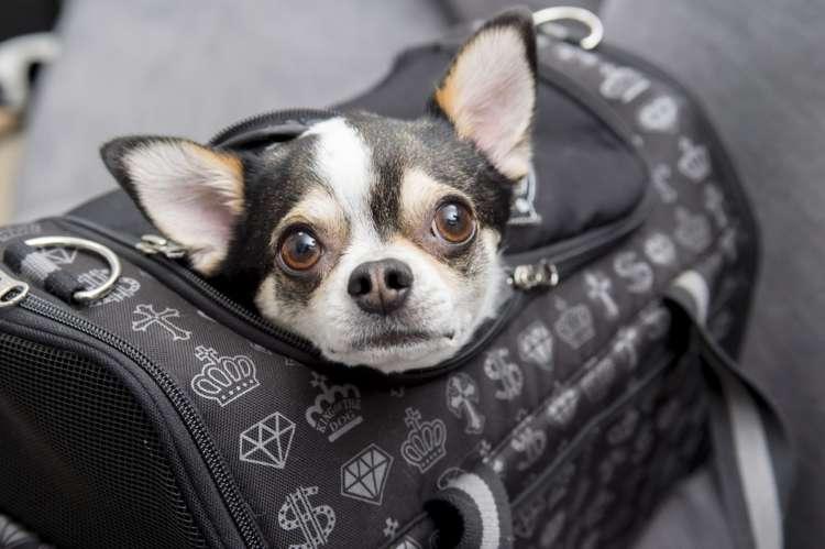 【チワワスタイル】【キミがいてボクがいる】My Dog! My Style!(その1)
