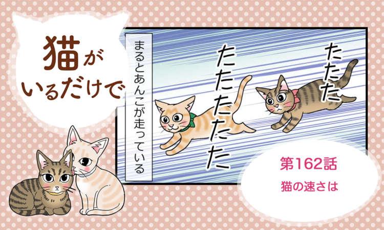 【まんが】第162話:【猫の速さは】まんが描き下ろし連載♪ 猫がいるだけで(著者:暁龍)