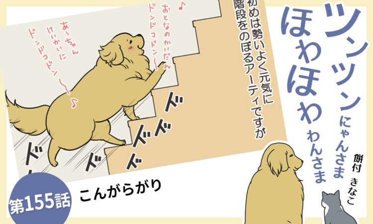 【まんが】第155話:【こんがらがり】まんが描き下ろし連載♪ツンツンにゃんさま ほわほわわんさま