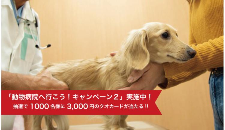 【獣医師×ドッグオーナー座談会】ペットの健康診断の必要性を徹底解析!!