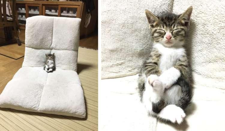 座椅子に座って、テレビを見ていた子猫ちゃん。まさかの寝落ち姿に、キュンとする(*´ω`*)♡